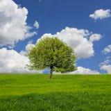 Landschap met boom op weide Royalty-vrije Stock Afbeelding