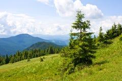 Landschap met boom op weide in bergen royalty-vrije stock afbeelding