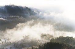 Landschap met bos en mist Stock Foto