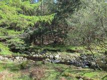 Landschap met bos in Ierland stock afbeelding