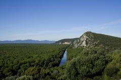 Landschap met clusterpijnbomen Stock Afbeelding