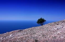 Landschap met de eenzame boom op de rots Stock Afbeeldingen