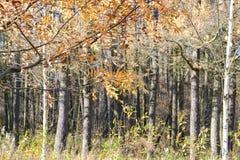 Landschap met de herfstbomen royalty-vrije stock afbeelding