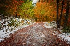Landschap met de herfstgebladerte in de bomen stock fotografie