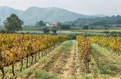 Landschap met de herfstwijngaarden en landbouwbedrijven stock foto's
