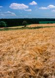 Landschap met de kweker van het gebiedsgraangewas en het hout royalty-vrije stock foto