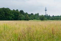 Landschap met de TV-toren in Frankfurt Royalty-vrije Stock Afbeelding