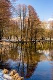 Landschap met de vroege lente Stock Foto's