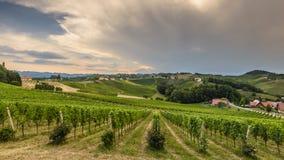 Landschap met de Wijngaard van Styrian Toscanië Royalty-vrije Stock Foto's