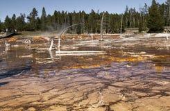 Landschap met dode bomen in het Nationale park van Yellowstone, WY, de V.S. Stock Afbeeldingen