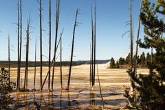 Landschap met dode bomen in het Nationale park van Yellowstone, WY, de V.S. Royalty-vrije Stock Afbeelding