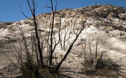 Landschap met dode boom bij de Mammoet Hete Lentes in het Nationale Park van Yellowstone, WY, de V.S. Royalty-vrije Stock Afbeelding