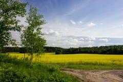 Landschap met een berk en een gebied Stock Fotografie