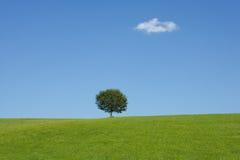 Landschap met een boom Stock Afbeeldingen
