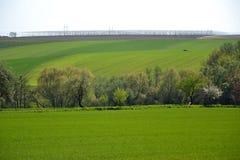 Landschap met een gebied van hopinstallaties Royalty-vrije Stock Afbeeldingen