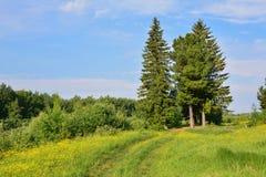 Landschap met een groene tunnel van bomen op een weg Royalty-vrije Stock Fotografie