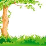 Landschap met een grote boom Stock Foto