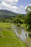 Landschap met een kleine rivier royalty-vrije stock afbeelding