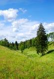 Landschap met een spar Stock Foto