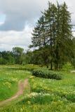 Landschap met een weg over een gebied Royalty-vrije Stock Afbeeldingen