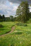 Landschap met een weg over een gebied, gebiedsbloemen Royalty-vrije Stock Fotografie