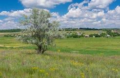 Landschap met eenzame silverberry boom op een heuvel dichtbij novo-Aleksandrivka dorp, de centrale Oekraïne Stock Afbeelding