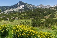 Landschap met Gele de lentebloemen en Sivrya-piek, Pirin-Berg stock afbeeldingen