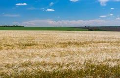 Landschap met gewassengebieden en blauwe hemel in Juni dichtbij Dnipro-stad Stock Fotografie