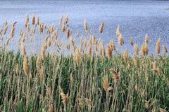 Landschap met gras Royalty-vrije Stock Afbeeldingen