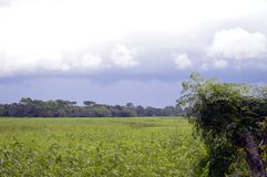Landschap met groen gebied en blauwe hemel royalty-vrije stock foto's