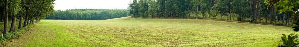 Landschap met groene ingediende omringende bomen Royalty-vrije Stock Foto