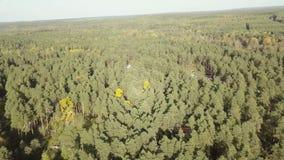 Landschap met groene nette bos, hoogste mening Hoogste mening van een eindeloos groen bos stock videobeelden