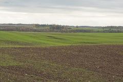 Landschap met groene tarwespruiten op landbouwgebied Stock Afbeeldingen