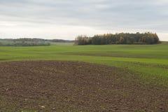 Landschap met groene tarwespruiten op landbouwgebied in de herfst Royalty-vrije Stock Foto