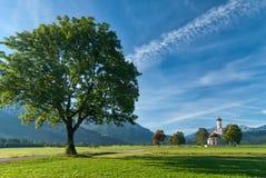 Landschap met grote boom Royalty-vrije Stock Foto