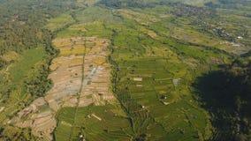 Landschap met het gebied Bali, Indonesië van het rijstterras Royalty-vrije Stock Foto