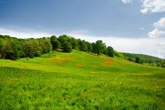 Landschap met heuvel en bos Stock Foto's