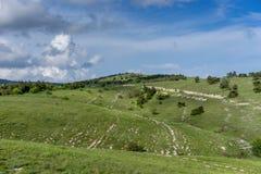 Landschap met heuvels met vegetatie worden behandeld die Stock Foto
