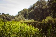 Landschap met installaties en een gras Royalty-vrije Stock Fotografie