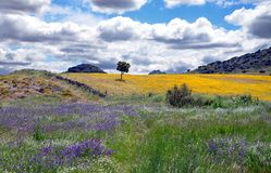Landschap met kleurrijke bloemen Royalty-vrije Stock Foto's