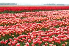 Landschap met landbouw de uitvoerzaken, Noordoostpolder, Nederland Stock Foto's
