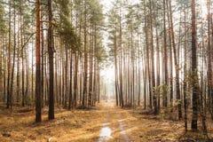 Landschap met Landweg in Autumn Foggy Forest stock foto's