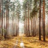 Landschap met Landweg in Autumn Foggy Forest royalty-vrije stock fotografie
