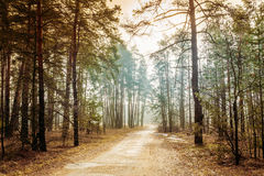 Landschap met Landweg in Autumn Foggy Forest stock fotografie