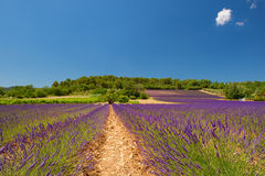 Landschap met lavendel Royalty-vrije Stock Foto's