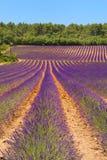 Landschap met lavendel Stock Fotografie