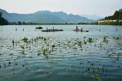 Landschap met lotusbloembladeren en berg Royalty-vrije Stock Afbeelding