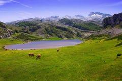 Landschap met meer en weiland Royalty-vrije Stock Afbeeldingen