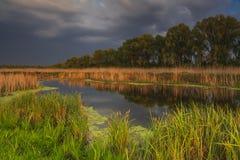 Landschap met moeras Royalty-vrije Stock Foto's