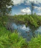 Landschap met moeraseenden royalty-vrije stock foto
